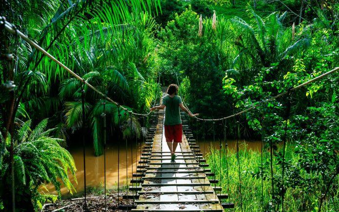 Selvas de Costa Rica, Esta tuani Costa Rica