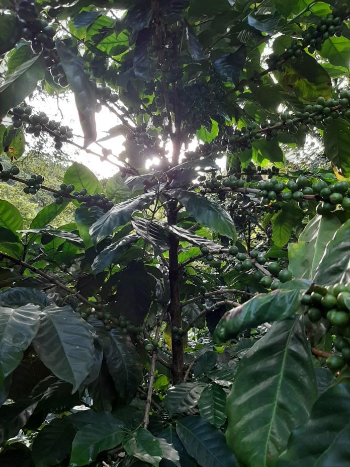 Nicaragua, Bosque las nubes