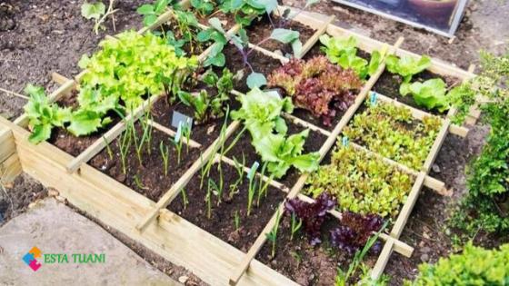 ¿Cómo crear un mini huerto casero? 5 consejos para mejores resultados