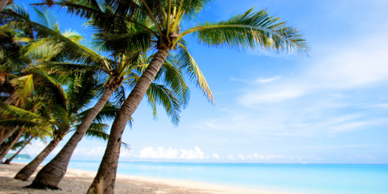 Tropical beach with blue water and palm trees