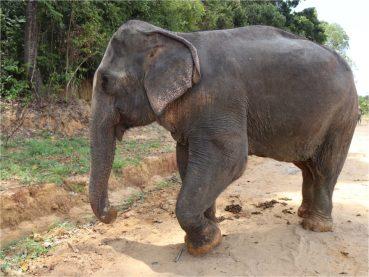 Krabi-sancturaire-elephant-4