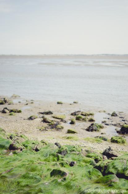 Vendée Août 2014 BD-111