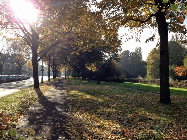 autunno olanda