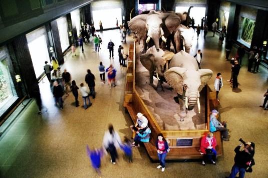 musée0008