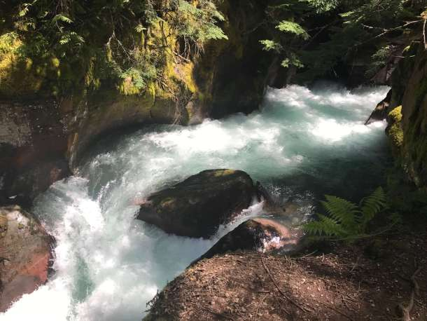 Wild and Free: Avalanche Creek in Montana