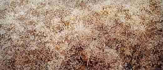 de grote witte sleedoorn door Hennie van der Vegt