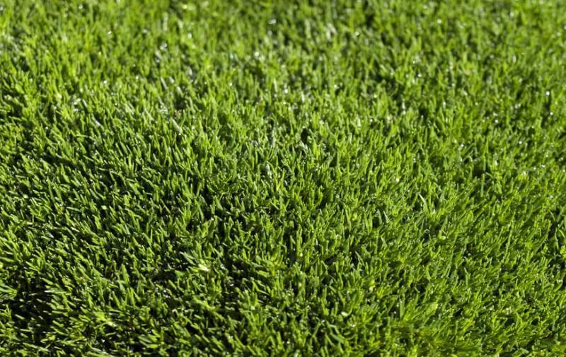 Как вырастить газон на своем участке