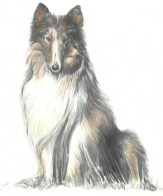 Treasure is a blind collie, and one of the many pets found on the Isle of Estillyen.