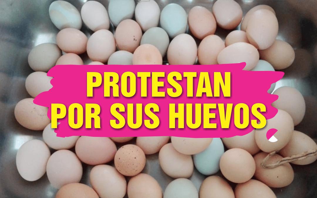 Por sus huevos: Gallinas planean manifestarse contra prohibición de Toño Trejo… «¿Por qué ya no dejan pelear a los gallos?»