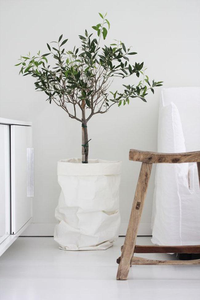 decoracion-blanco+plantas-03