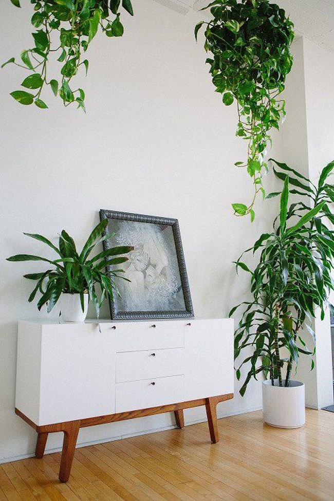 decoracion-blanco+plantas-09