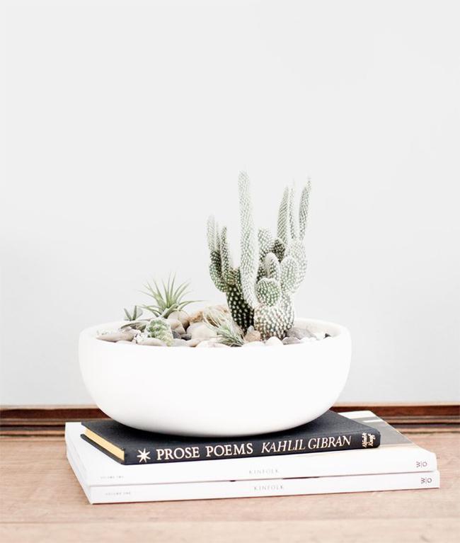cactus-09
