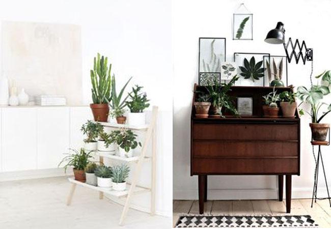 decorar-con-plantas-12