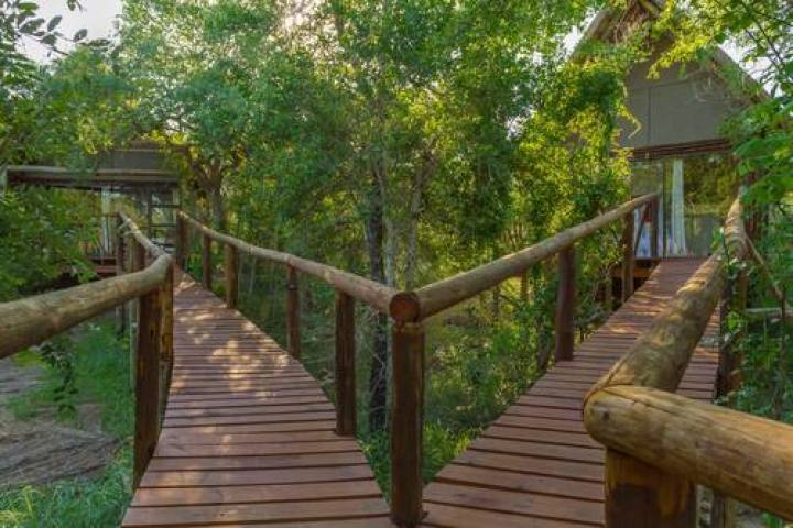 Wooden Walkway on Stilts Boardwalk Panzi Lodge Hoedspruit Limpopo Guernsey Private Nature Reserve South Africa (2)