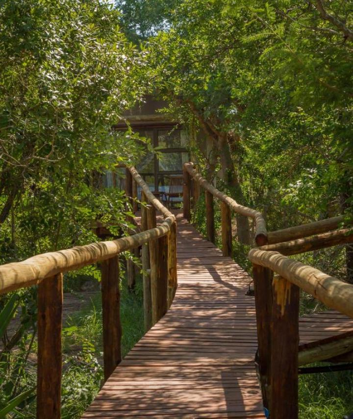 Wooden Walkway on Stilts Boardwalk Panzi Lodge Hoedspruit Limpopo Guernsey Private Nature Reserve South Africa