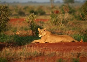 Parks and Beaches-Tsavo-West-National-Park