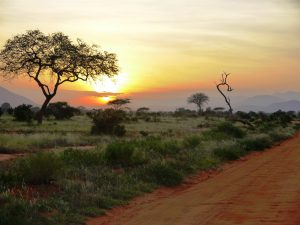 Parks and Beaches-Tsavo East National Park