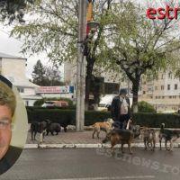 Cum a reușit municipiul Vaslui să rezolve problema maidanezilor și de ce primarul Boroș nu poate?