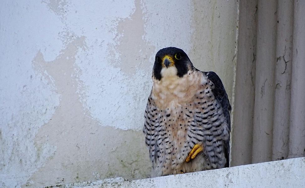 Avistamiento de Aves Migratorias