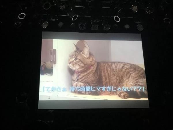 やっぱり「猫」w