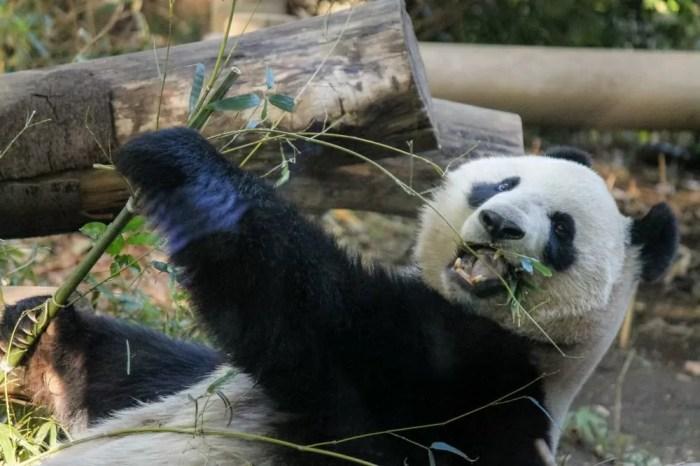 稼げるWEBライターになろうとしているパンダ