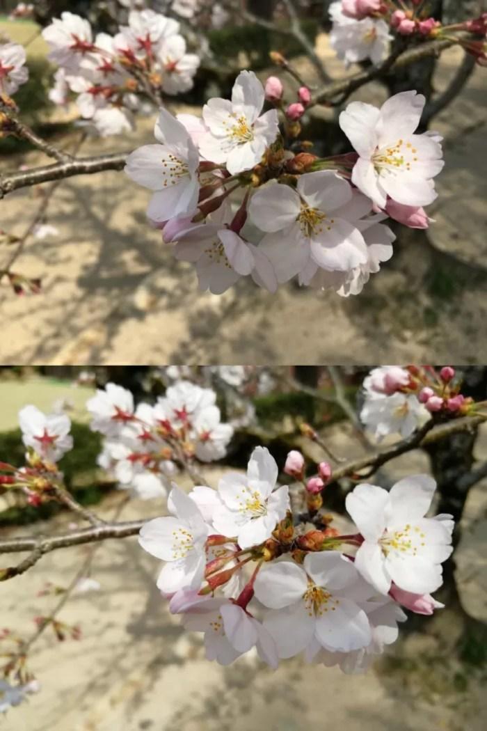 iPhone 6sとHUAWEI nova 2のカメラ画像比較