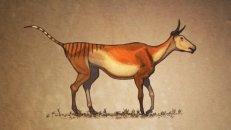 """Vaca - """"Nós desenhamos essa vaca sem nenhuma gordura ou músculos para criticar as reconstruções dos dinossauros feitas hoje em dia, que lembram zumbis"""""""