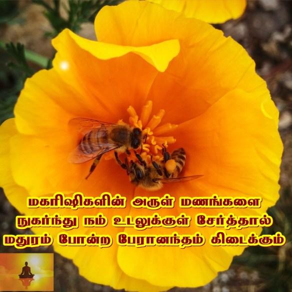 Honey bee flower