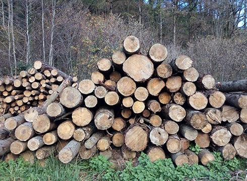 Bioenergiari buruzko V. Jardunaldiak egingo dira eguazten eta eguenean