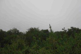 ouachita mountains, sugarloaf vista