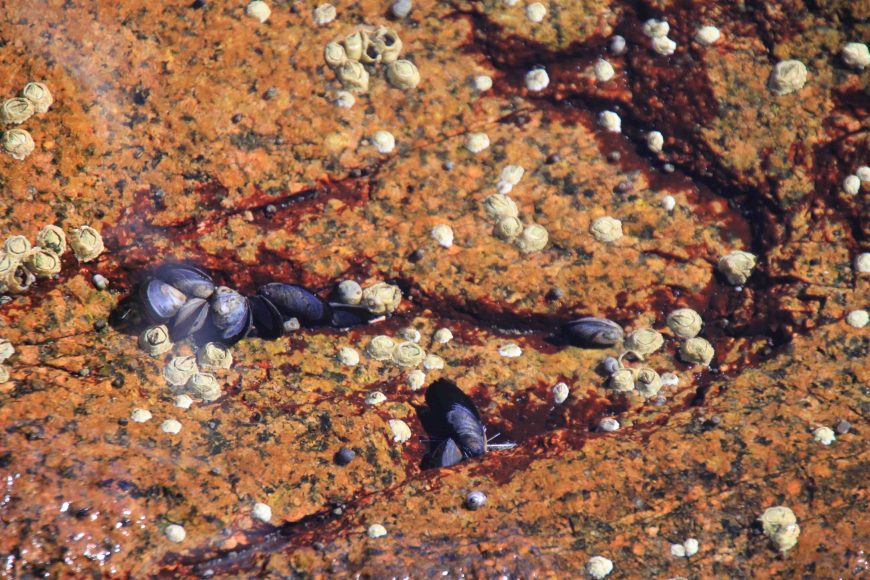 Mount Desert Island, Acadia National Park