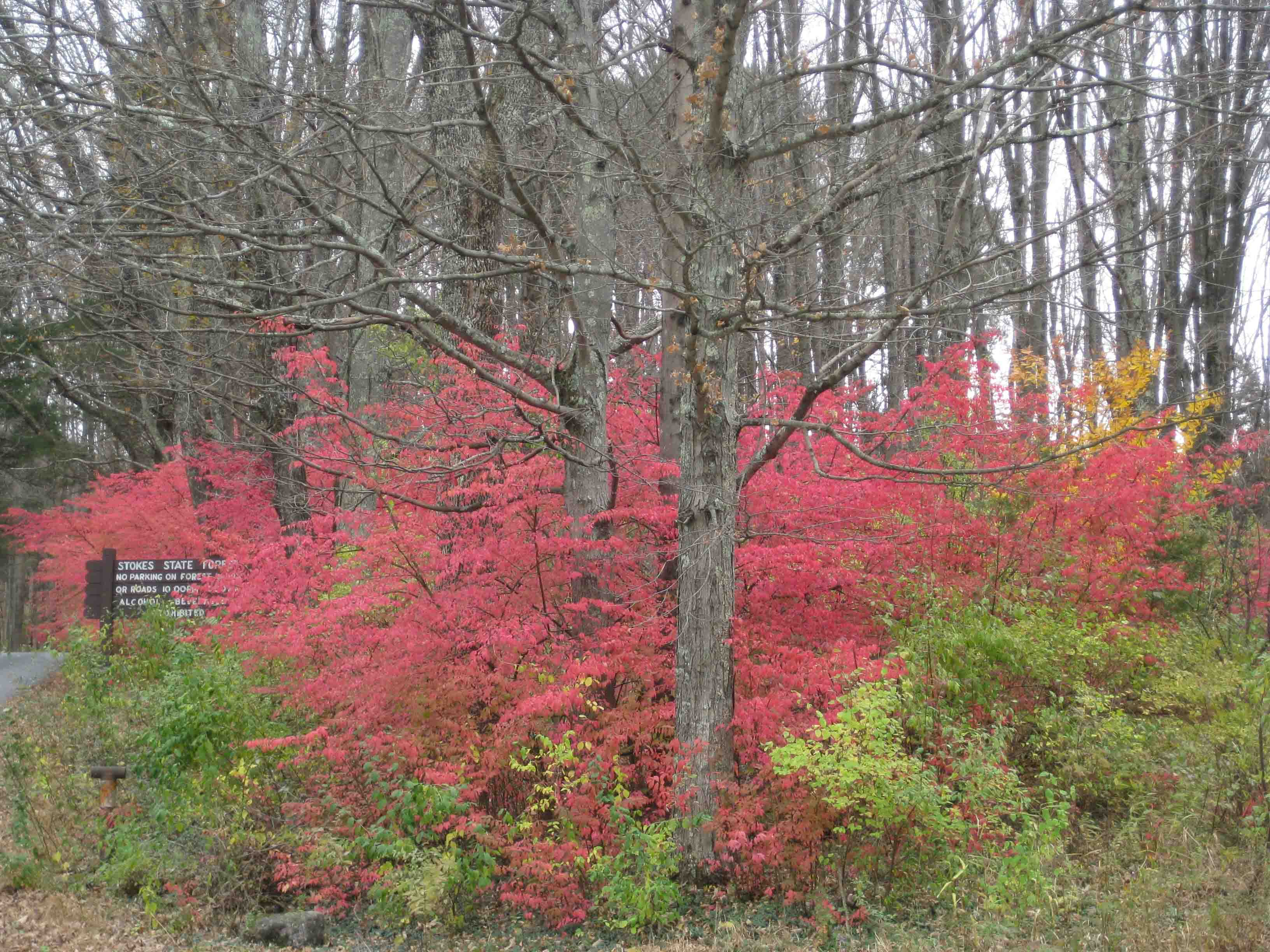 stokes state forest