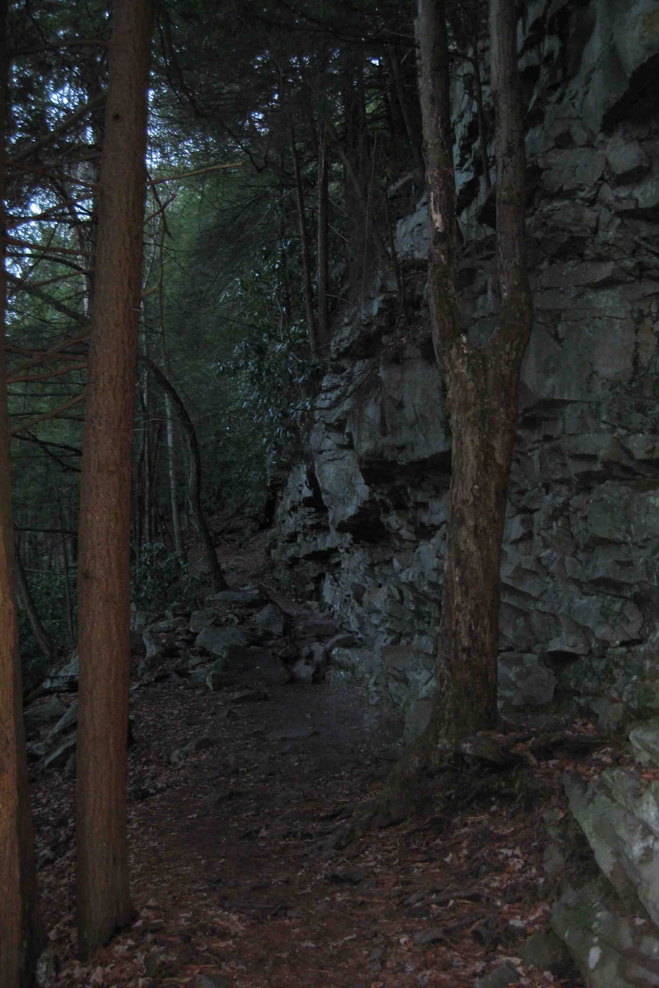 trail in blackwater falls state park