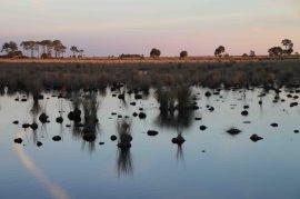 st. marks national wildlife refuge