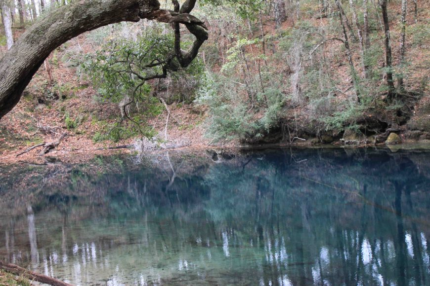 hammock sink in leon sinks geological area in the florida panhandle