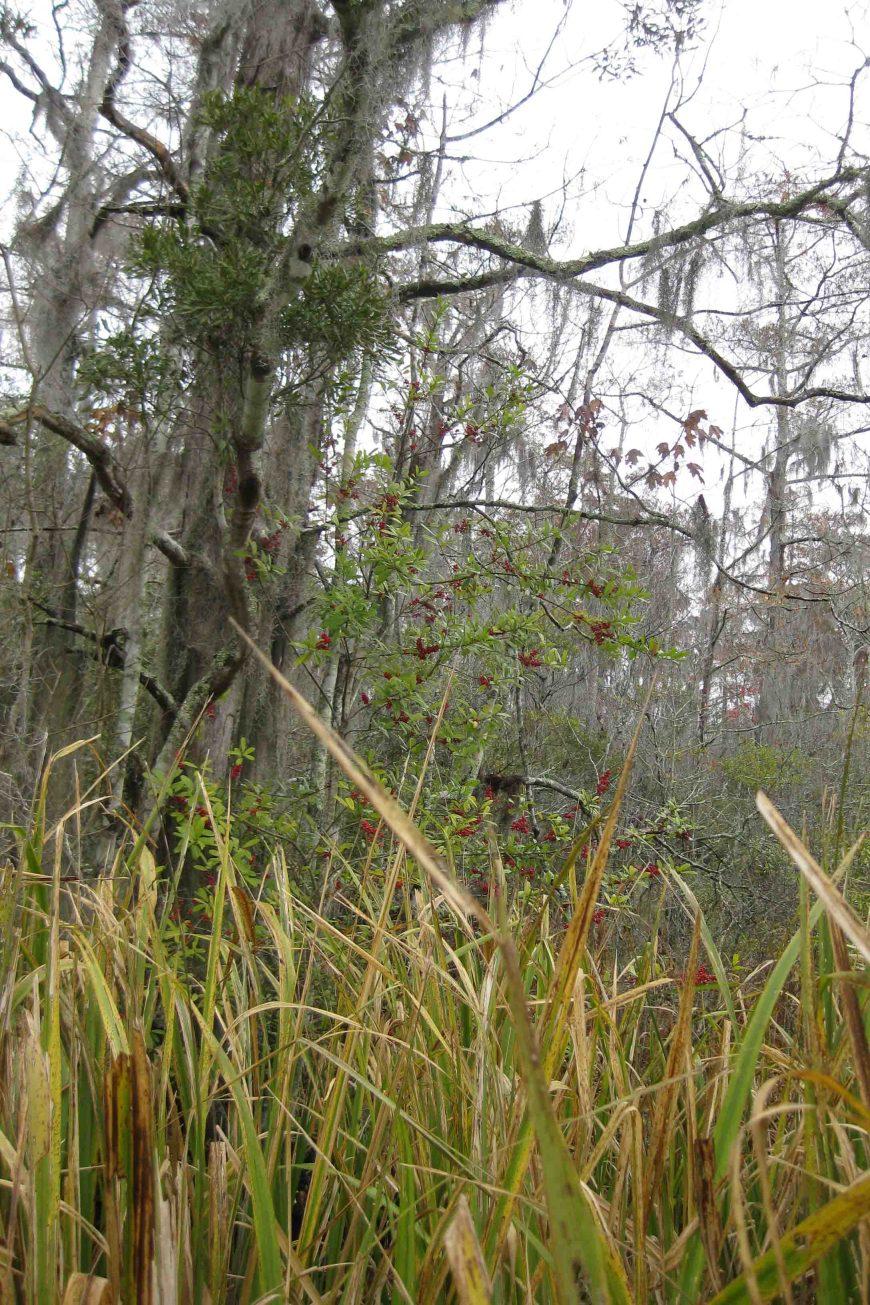 Jean Lafitte National Historical Park and Preserve, Barataria Region in Louisiana