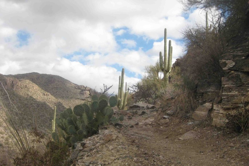 telephone line trail in sabino canyon