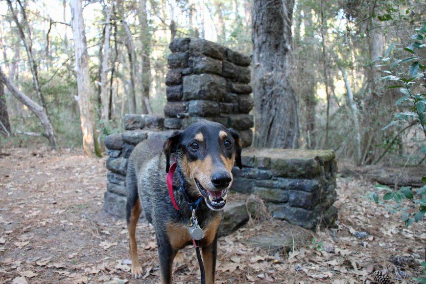 Petey at Bastrop State Park