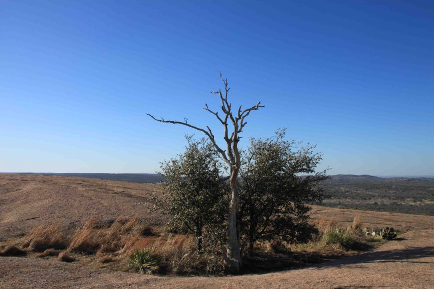 tree on top of enchanted rock
