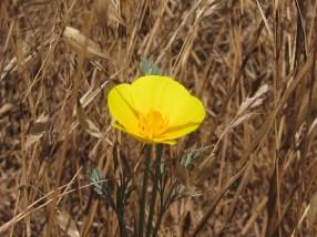 img_8945 flower 5