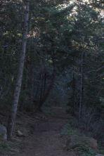 IMG_1028 woods