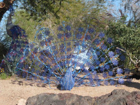 IMG_1121 mm peacock