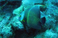 IMG_3056 angelfish