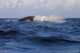 IMG_3625 humpback