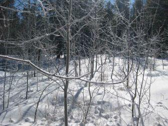 IMG_3281 trees