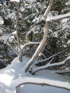 IMG_3302 tree