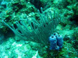 IMG_3519 sponge