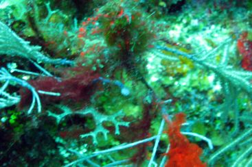 solitary hydroid (white spot with tenacles in middle left). Blurry...there was a current