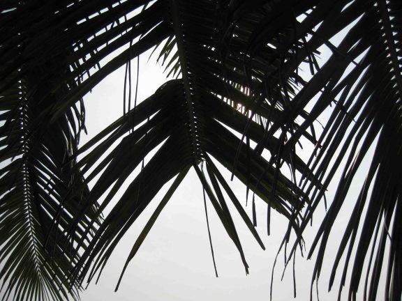 IMG_4093 palms