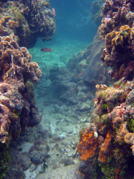 IMG_4123 coral
